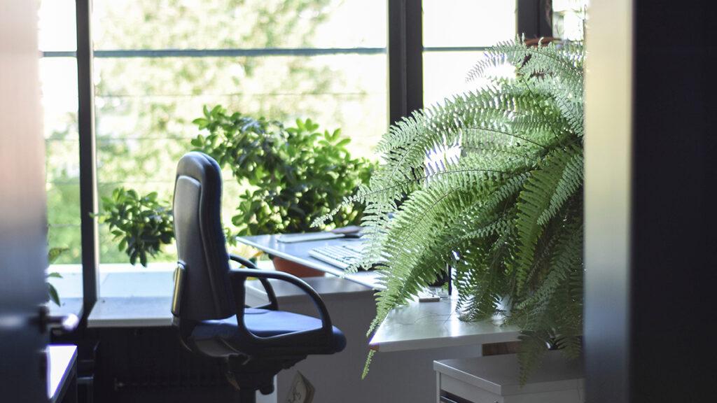 ¿El #1 Office Perk? Luz natural